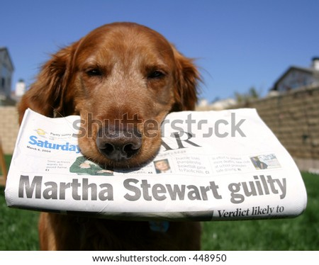 Newspaper dog - stock photo