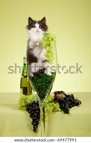 NFC kitten sitting inside large wine glass with grapes - stock photo