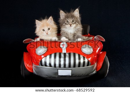 NFC kittens with soft toy car on black background - stock photo