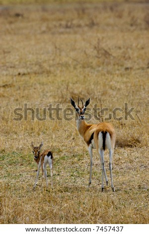 Ngorongoro Crater Wildlife - stock photo
