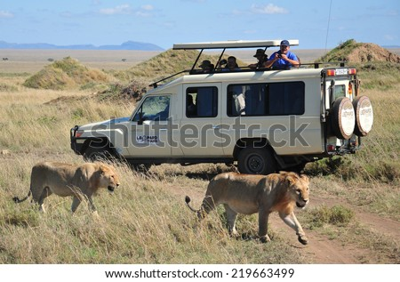 NGORONGORO TANZANIA - OCTOBER 22: Picture of some tourists in a car looking a lion during a typical day of a safari on October 22, 2010 in Ngorongoro crater Tamzania  - stock photo