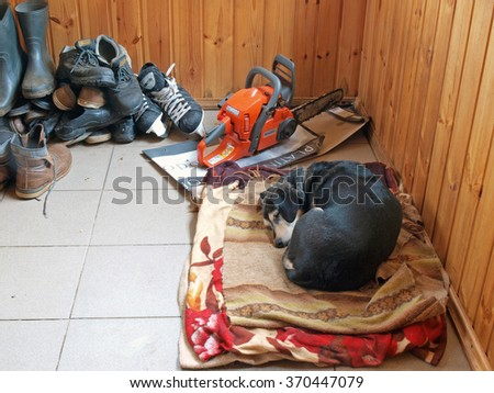 NICA, LATVIA - JANUARY 29, 2016: Small black dog is sleeping on his mat near boots and shoes and chainsaw.      - stock photo