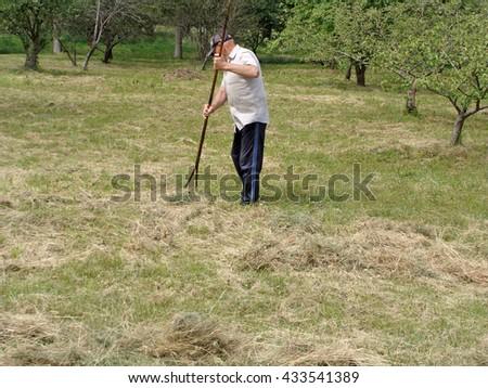 NICA, LATVIA - JUNE 7, 2016: Senior man is raking hay with wooden rake in the garden. - stock photo