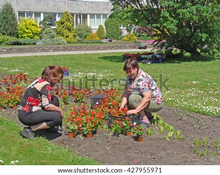 NICA, LATVIA - MAY 25, 2016: Two women gardeners are weeding flower bed and planting new flowers near council building. - stock photo