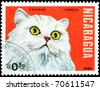 NICARAGUA - CIRCA 1984: A stamp printed in Nicaragua showing Chinchilla cat, circa 1984 - stock photo