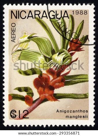 NICARAGUA - CIRCA 1988: A stamp printed in Nicaragua shows Anigozanthos manglesii, circa 1988  - stock photo