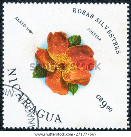 "Nicaragua - CIRCA 1986: Stamp printed in Nicaragua, shows , series of images ""Flowers Roses"", circa 1986  - stock photo"