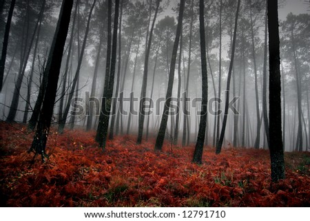 nice and cold autumn landscape - stock photo