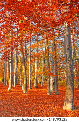 Nice and colorful forest in autumn
