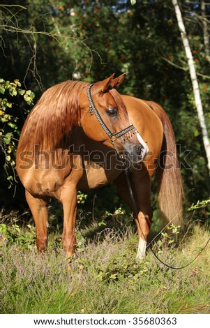 Nice arabian horse in the forest
