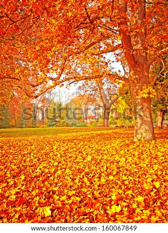 Nice autumnal scene with vivid colors