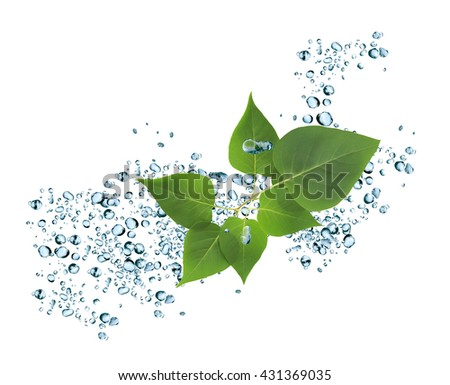 Nice background made from splashing water and twig of green leaves - stock photo