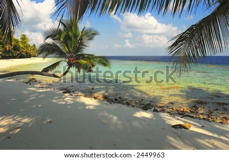 Nice beach with palm tree in the  Indian Ocean, Maldives Island Filiteyo