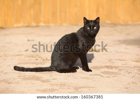 Nice black cat sitting and looking at you - stock photo