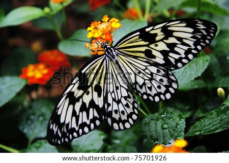 Nice butterfly on flower - stock photo