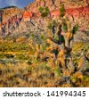 Nice Cactus Image at Red Rock Nevada - stock photo