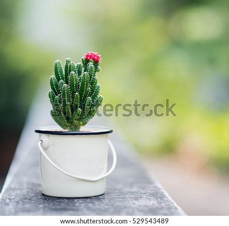 Nice cactus with pink flower in vintage color style
