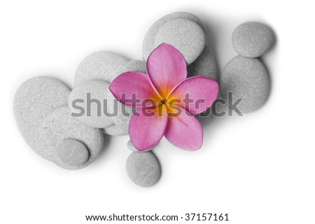 Nice calm image of beach pebbles with a single pink frangipani flower on a white background - stock photo