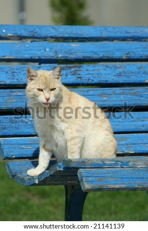 Nice cat - stock photo