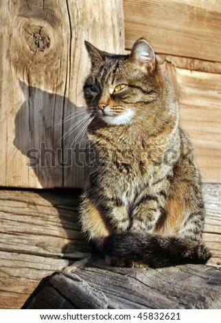 Nice cat in the counry - stock photo
