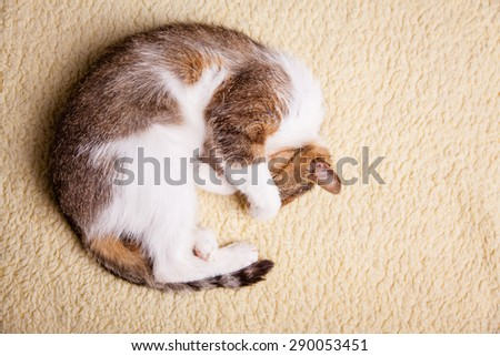 nice cat relaxing at home - stock photo