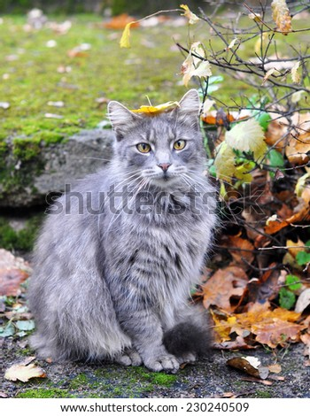 nice cat sitting with a leaf on his head - stock photo