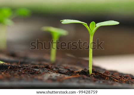 nice concept image of small plant sprout - stock photo