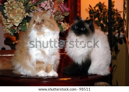 Nice couple of cats - stock photo
