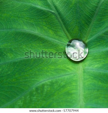 nice detail of water drops on leaf - macro detail - stock photo