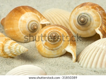 nice different shells lying on white sand