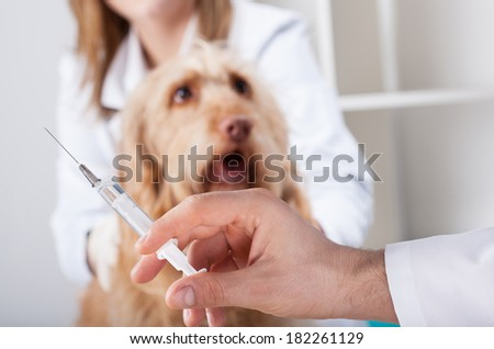 Nice dog before injection at vet office - stock photo