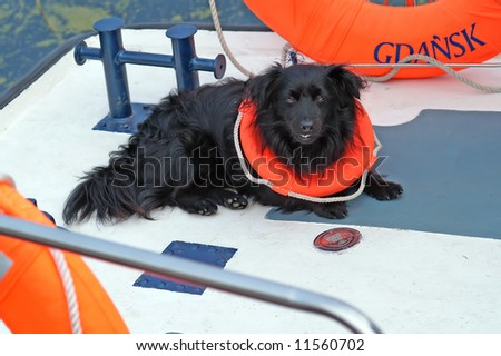 nice dog in life ring - stock photo