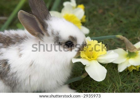 Nice easter rabbit on a green lawn
