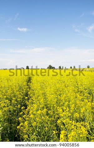 Nice field landscape - stock photo