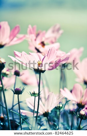 nice flowers - stock photo