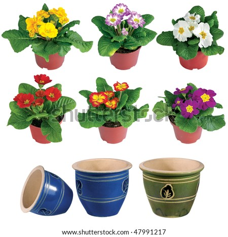 Nice flowers growing in a brown pot and empty pot isolated - stock photo