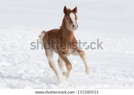 Nice foal running - stock photo