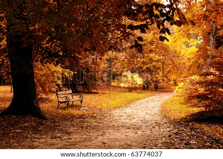 nice forest , autumn - stock photo