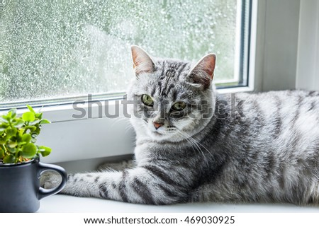 Nice gray cat on a window sill