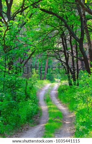 nice green forest and rut road