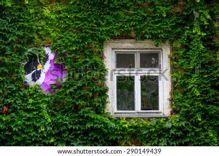 nice green wall and window - stock photo
