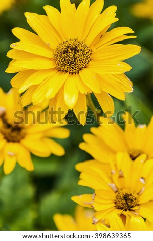 nice group of yellow flower in the garden