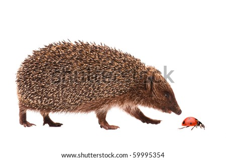 Nice hedgehog and ladybird isolated on white background - stock photo