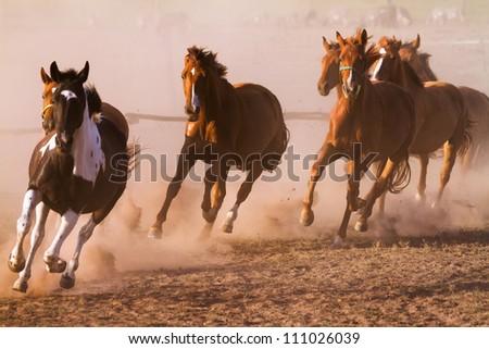 Nice herd gallops in the dust - stock photo