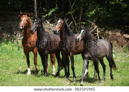 Nice herd of horses beeing together on green pasturage - stock photo
