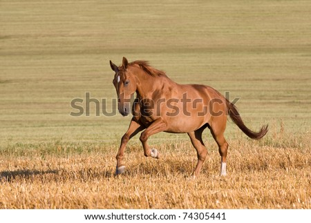 Nice horse running - stock photo
