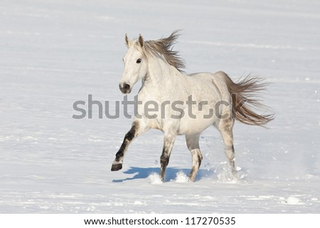 Nice horse running through snowy landscape - stock photo