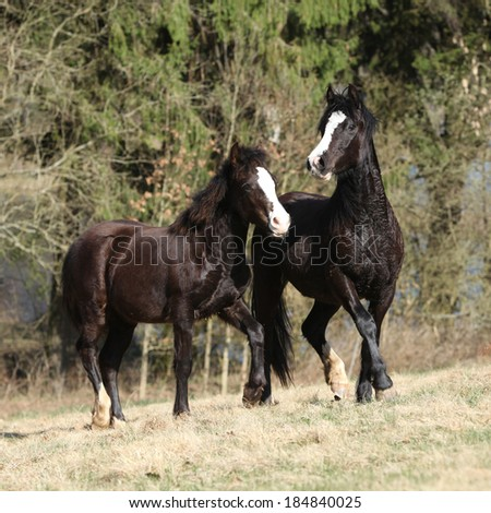 Nice horses running on spring pasturage together - stock photo