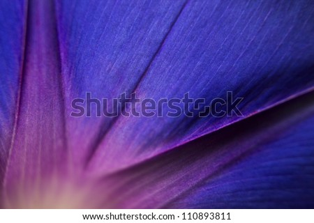 nice image with beautiful flower can use like wallpaper - stock photo