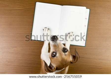 Nice Jack Russell terrier dog making notes in the album white sketch book. Empty space you can put your information. Looking to the camera - stock photo